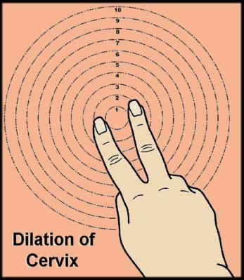 Dilated 1 finger fingertip dilated ob pinterest ccuart Gallery