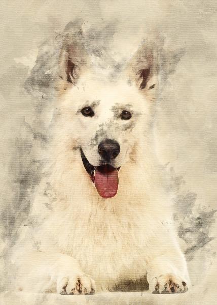 Pin On Pet Portrait Watercolor Noahsark