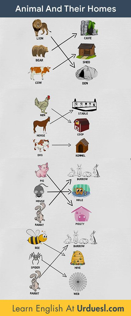 Animal And Their Homes With Pictures Download Pdf Ppt Animals And Their Homes Animal Flashcards Animals
