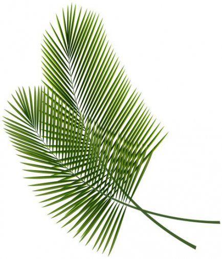Palm Tree Leaves Png 35 Ideas Tropical Leaves Leaf Images Printable Leaves
