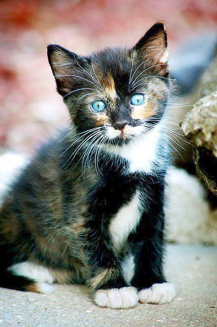 Brilliant Cute Cats For Sale In Karachi Exceptional Cute Cats Cats Kittens Cutest