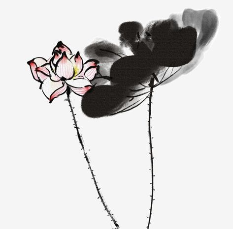 Foto Bunga Teratai Hitam Beragam Gambar Bunga Teratai Ada Disini Foto Dan Gambar Bunga Cantik Untuk Laptop Tuhan Memang Ma Bunga Teratai Bunga Gambar Bunga
