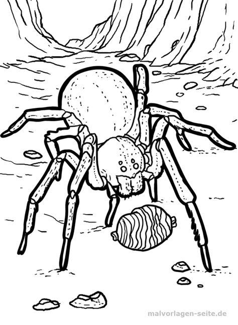 malvorlage spinne  tarantel in 2020  malvorlagen