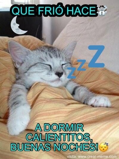 Buenasnochespeludos Goodnight Bonnenuit Feliznoche Adormir Foto Photo Photography Peludos Mascotas Mascott Gatitos Divertidos A Dormir Buenas Noches