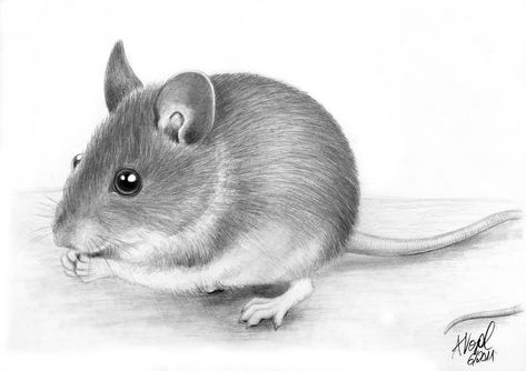 Photo of Little house guest by antoniavogel on DeviantArt