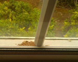 Drywood Termite Control Santa Clara County San Diego County Drywood Termites Termite Control Termites