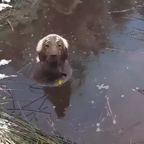 Playing in the mud.