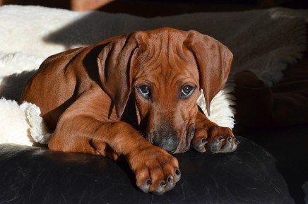 Im Neuen Heim Susse Tiere Tierheim Hunde Susse Hunde Welpen