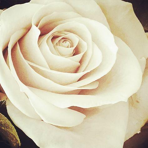 gezelligheid Have a beautiful day Bedankt...