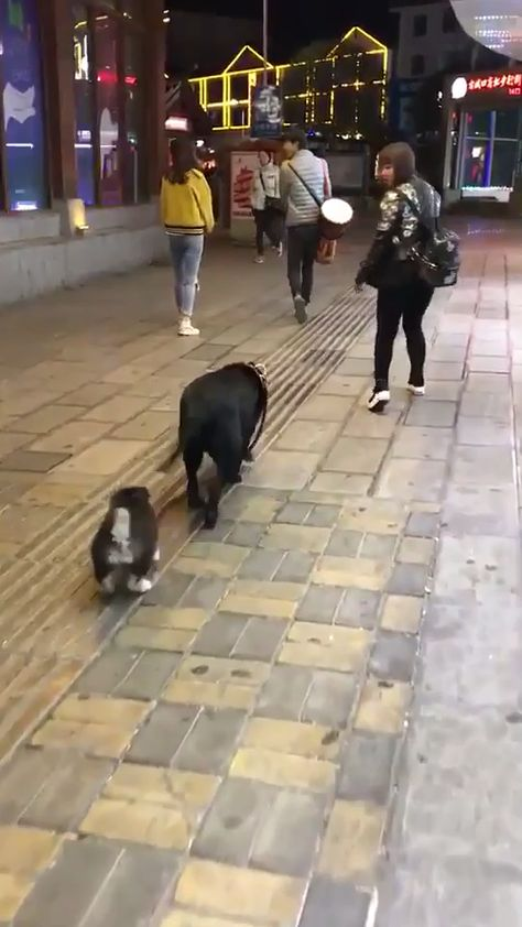 Click to see GIF Taking his buddy out for a walk on Funny Goblin, the best creative humor community to search and share your favorite funny pictures, memes, gifs, jokes, humour pics, videos on internet.
