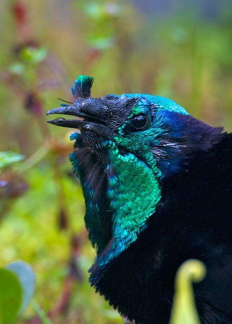82 Best Birds-A images in 2020 | Birds, Pet birds, Animals