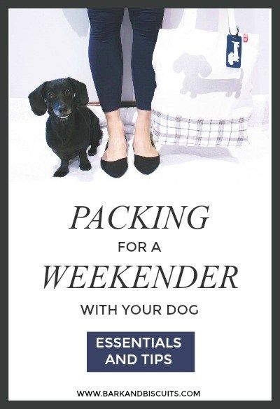 Packing Essentials For A Weekender With Your Dog Dogs Dachshund