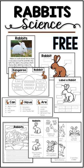 Free Rabbit Science Printables Activities Mrs Thompson S Treasures Science Printables Kindergarten Science Free Rabbits Rabbit worksheets for kindergarten