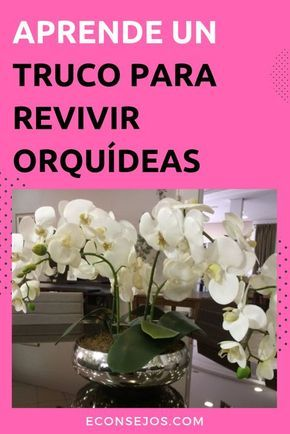 800 Ideas De Orquídeas En 2021 Cultivo De Orquídeas Orquideas Plantas De Orquideas