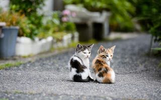 Pin On Cat S Pictures