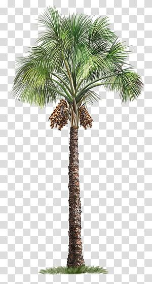 [+] Palm Tree Png