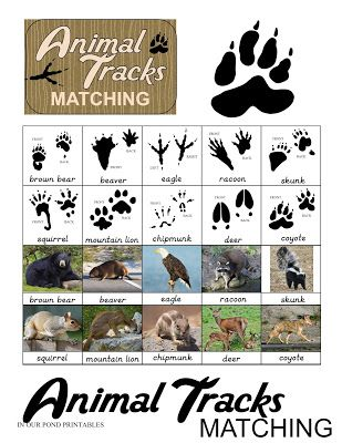 photograph regarding Free Printable Animal Tracks called The Easiest Community Video games for Tenting (with absolutely free printable) Child