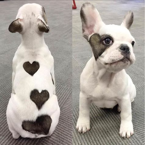 This pooch has hearts! - Imgur