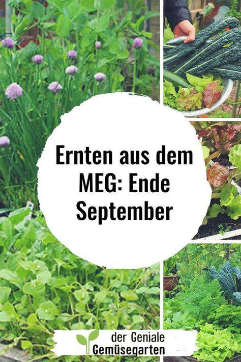 In 2017 beweise ich dir, dass ich aus nur einem einzigen Gemüsebeetkasten frisches und biologische Gemüse im Wert von mindestens 150€ ernten kann. #Gemüse #Bio #Balkon #gärtnern #Garten