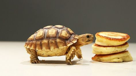 five differences between turtle and