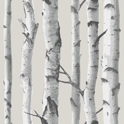 Wallpops Nuwallpaper Birch Tree Peel And Stick Wallpaper Big