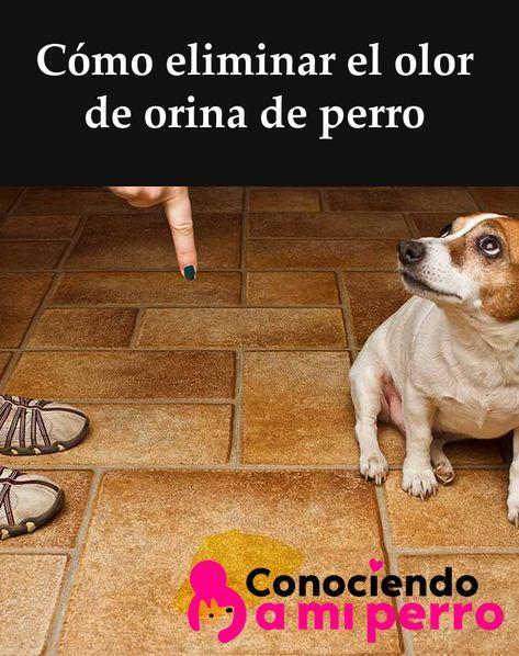 Cómo Eliminar El Olor De Orina De Perro Orina De Perro Olores De Orina Repelente Para Perros