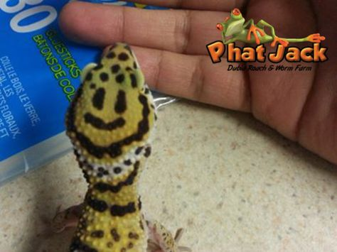 Phat Jack Farms Phatjackfarms Profile Pinterest