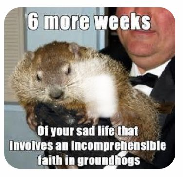 Groundhog Day In 2021 Funny Pictures Punxsutawney Phil Groundhog