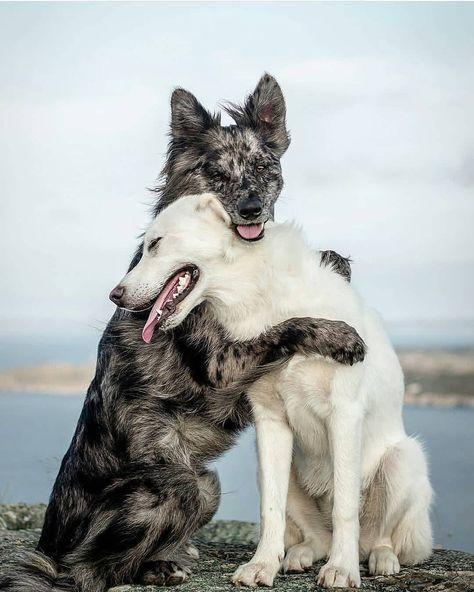 Photographers Of India Mumbai Cute Dog Photos Beautiful Dogs