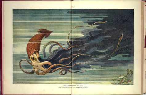 Squid book