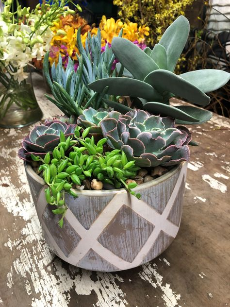 Elegance with Succulents in Playa Del Rey, CA