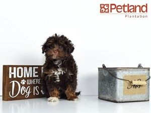Puppies For Sale Puppies Puppy Friends Dogs