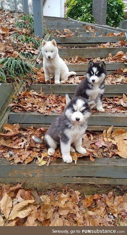 Honokohau Falls Hawaii Puppies Cute Animals Easiest Dogs To Train