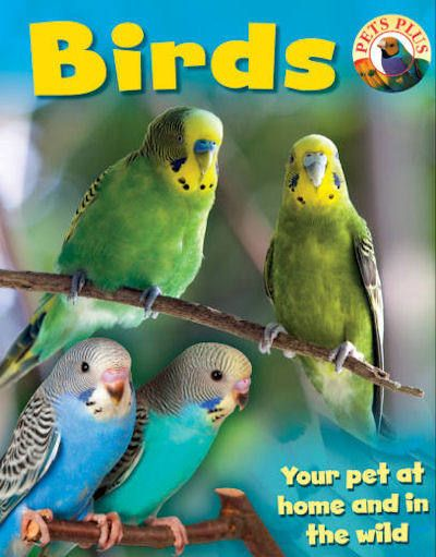 Birds 13 Pets Plus In 2019 Class Pet Pets Birds