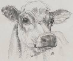 Image Result For How To Draw A Cow Face Pencil Drawings Of