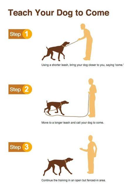 Pindescription Dog Training Https Www Youtube Com Watch V