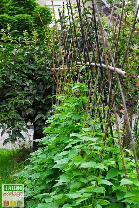 Tuteur Haricot Ecosia Trees To Plant Vegetable Garden Plants