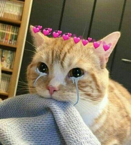 56 Trendy Memes Para Contestar Gatos Memes Meme Gato Mascotas