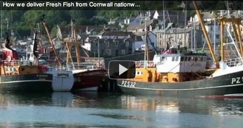 Fresh Fish from Cornwall | Seafood Wholesale Distributors | Buy Online in bulk | Wing of St Mawes The Cornish Fish Merchant | Fresh Fish Delivery