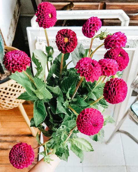 +35 Were pretty sure its impossible to not love dhalias