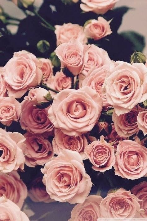 17 Ideas Wall Paper Iphone Vintage Flowers Tumblr Pink Roses