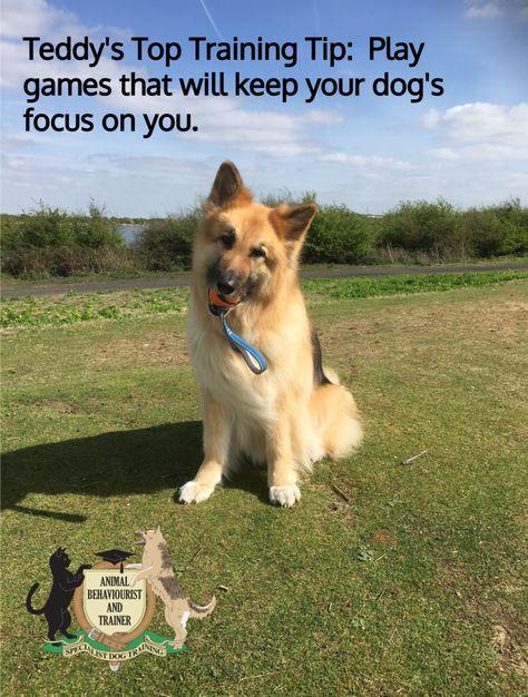 Teddy S Top Training Tip 13 04 17 Training Your Dog Dog
