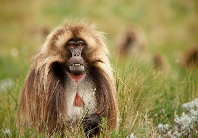 Strange Animals That Start With G Weird Animals Baboon Animals