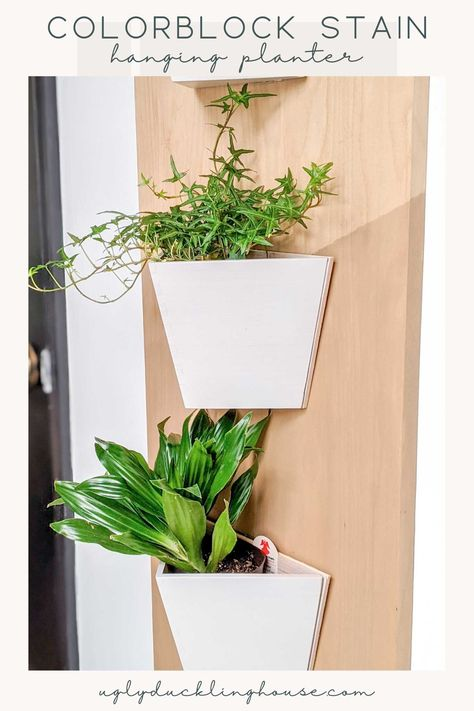 You CAN colorblock with stain! In this tutorial, see how to get a crisp line on wood using stain. Also a great Ikea hack project to turn VILDAPEL planters into wall planters for a cute display and fill a narrow wall with modern design. sponsored by Minwax #houseplants #indoorplants #hygge #wallart #planters #ikeahack #scrapwood #colorblock #stain #woodworking