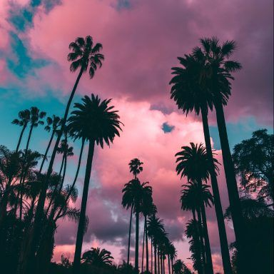 10 Ways To Make Literally Anyone S Day Brighter Palm Tree Iphone Wallpaper Palm Trees Wallpaper Tree Wallpaper Iphone Beautiful palm tree wallpaper for