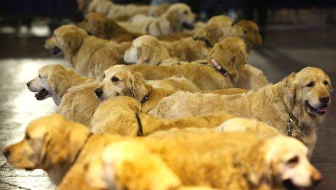 23 Fantastic Dog Photos From Crufts The U K S Kennel Club Dog