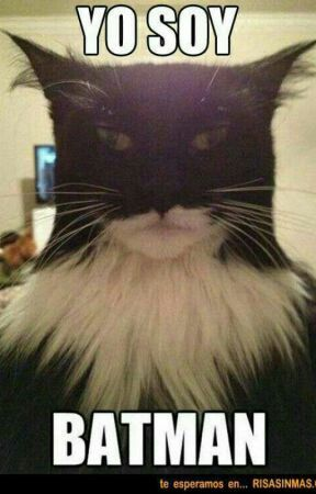 Imagenes Graciosas Memes Gracioso Risa Divertido Chistes Humor Batman Anim Memes Divertidos Memes De Animales Divertidos Humor Divertido Sobre Animales