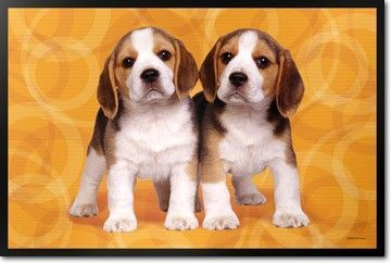 Cute Beagle Puppies On A Colorful Graphic Background Are Just Ready To Be Admired On This Pet Dining Mat With This Dog Placem Beagle Puppy Cute Beagles Beagle