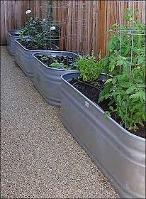 Container garden in galvanized water troughs.  Hmmm...could spray paint coppery color.   Love!