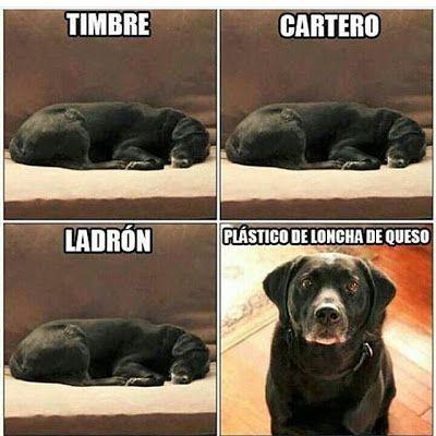 Perro Guardian Imagenes De Humor Humor Divertido Sobre Animales Memes Divertidos